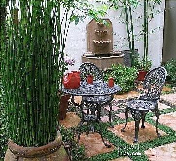喜欢这个竹子和石板